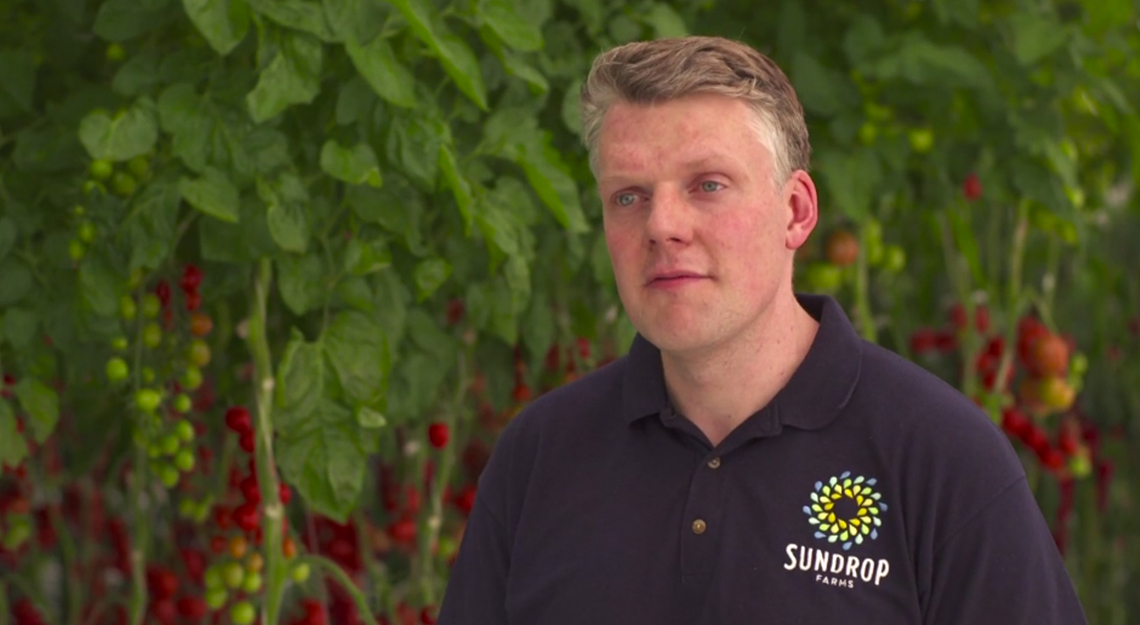 Philipp Saumweber, CEO of Sundrop Farms